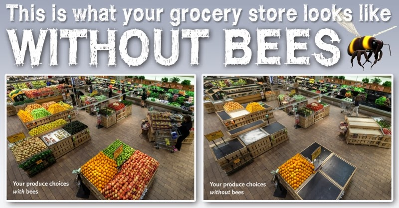 This is what your grocery store looks like without bees: http://3.bp.blogspot.com/-epbuY7scRqs/UkmUPvq1sAI/AAAAAAAAG3A/lSkvsdXC9ng/s1600/Bees1.jpg