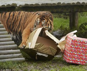 Source: http://www.dailymail.co.uk/news/article-2527639/Easy-tiger-want-reuse-wrapping-paper.html