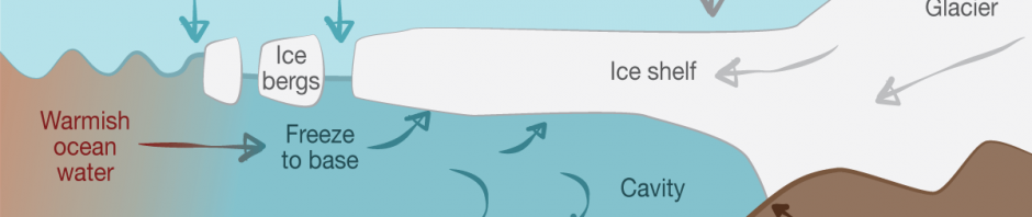 A diagram showing that in winter, sea water freezes to the underside of the ice shelf, forming a body of cold, salty, dense water that protects the edge of the glacier from being melted by warmer ocean water, then sinks to the ocean floor, driving global ocean circulation.