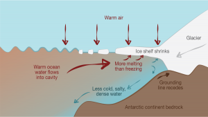 Diagram showing that under warm climate conditions caused by excess CO2 in the atmosphere, warm air and sea water melt the ice shelf, reducing formation of the cold, salty, dense water that protects the edge of the glacier. Warm water can now intrude under the ice shelf, accelerating its disintegration.